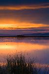 Waterfowl at sunrise, Lower Klamath National Wildlife Refuge, Siskiyou County, California