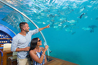 Maldives, Rangali Island. Conrad Hilton Resort. Couple at Ithaa underwater restaurant. (MR)