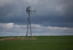Washington, Eastern, Steptoe, Palouse Region. An old windmill in a field of winter wheat under cloudy skies in spring.