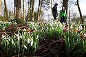 24/01/15<br /> <br /> Ben Lester and Chloe Kirkpatrick admire the snowdrops at Hopton Hall, near Ashbourne, Derbyshire.<br /> <br /> All Rights Reserved - F Stop Press.  www.fstoppress.com. Tel: +44 (0)1335 300098