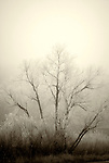 Icy Field and Woodland #3.  From the Palmer Divide Series.  Sepia Toned.