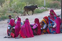 Village and rural life near Jodhpur, Rajasthan, India