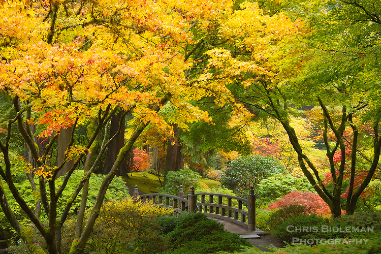 Portland japanese garden fall colors with moon bridge for Japanese garden colors