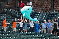 Fans pass an inflated whale through the stands during a between innings contest at the Carolina League game between the Buies Creek Astros and the Winston-Salem Dash at BB&T Ballpark on April 16, 2017 in Winston-Salem, North Carolina.  The Dash defeated the Astros 6-2.  (Brian Westerholt/Four Seam Images)
