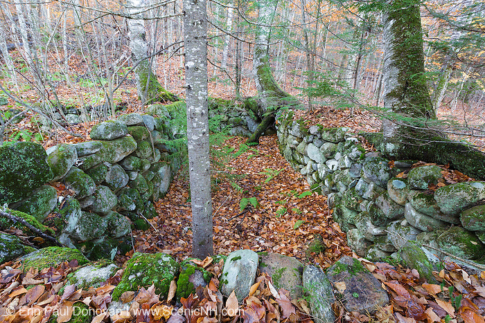 Abandoned cellar hole at Thornton Gore in Thornton, New Hampshire during the autumn months. Thornton Gore was the site of an old hill farming community that was abandoned during the 19th century. Based on an 1860 historical map of Grafton County this is believed to have been the T. Wyatt homestead.