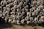 sea anemones on rock
