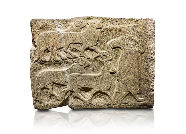 Alaca Hoyuk Sphinx Gate Hittite monumental relief sculpted orthostat stone panel. A figure bringing sacrificial animals.  Anatolian Civilizations Museum, Ankara. Turkey<br /> <br /> The figure wearing a long-tailed cloak holds, with the right hand, the horn of the goat coming from behind.  <br /> <br /> Against a white background.