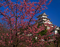 Himeji Castle and cherry blossoms  Hemeji, Japan  Western Honshu Province  Built in 1609  One of Japan's most magnificent castles