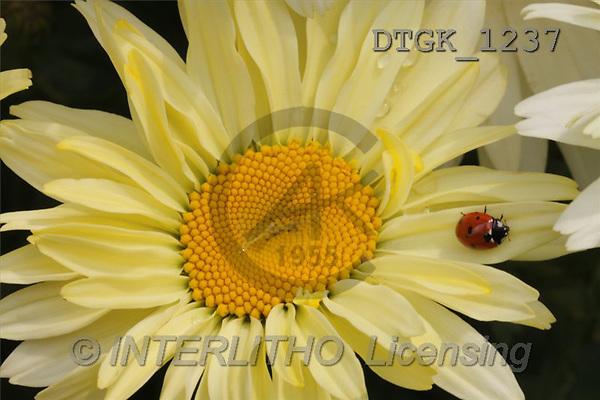 Gisela, FLOWERS, photos(DTGK1237,#F#) Blumen, flores, retrato
