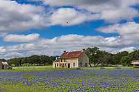 We can never get enough of this old dilapidated farmhouse with bluebonnets in the Texas Hill country. Every year people come to photograph this place as the spring bluebonnets come out. It was a beautiful day with white puffy clouds and even a couple of buzzards flying in the sky so we stopped for one more time. In this field of Texas bluebonnets you can see some old rusty farm equipment which adds to the charm. Bluebonnet season is short so you gotta catch them when you can as it only last for a couple of weeks. The Lupine or bluebonnet is the state flower of Texas so it is quite popular.