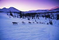 S.Zuray Mushing uphill ckpt Rainy Pass 1996 Iditarod