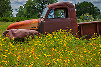 Old Truck and Texas Wildflowers - Comming back from Dallas we ran across this old rusty truck with prickly pear growing behind and into the bed of the truck with these texas wildflowers growing in front.  We of course had to stop and catch a photo because who knows when we might come back.