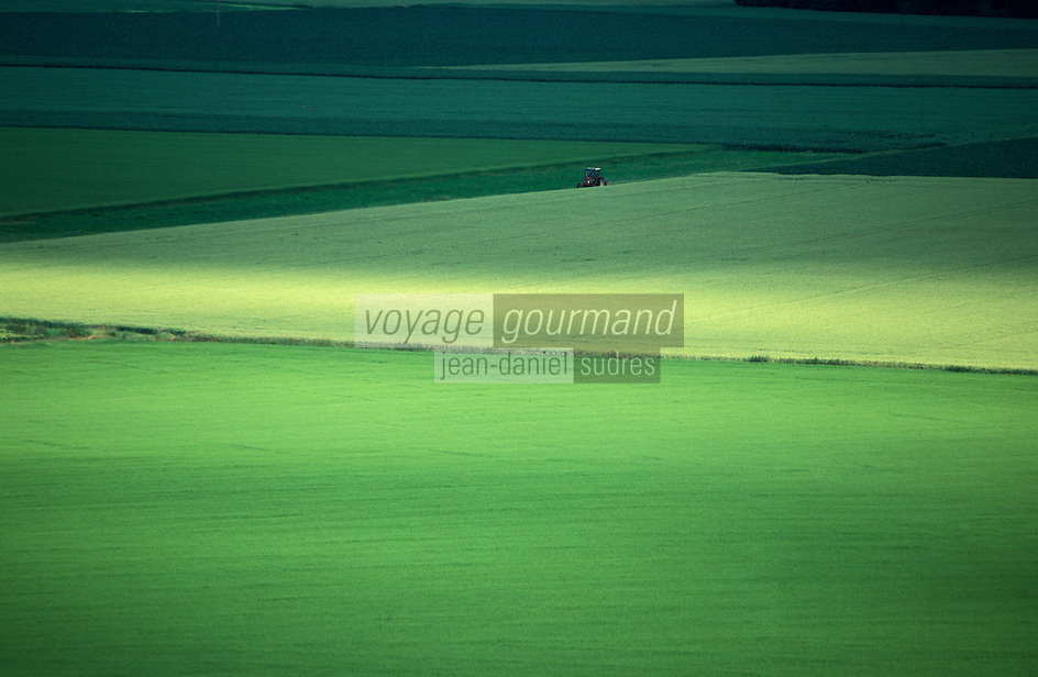 Europe/France/Ile-de-France/77/Seine-et-Marne/Env de Doue: Paysage agricole de la Brie