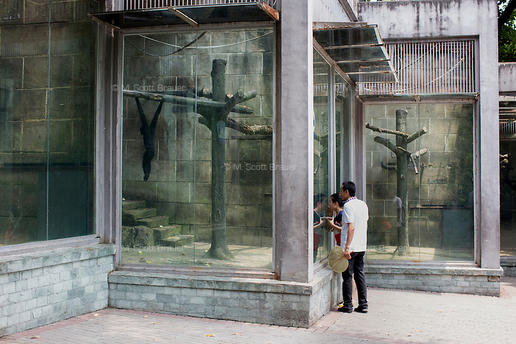People look at monkeys in a cage in the zoo in Chongqing, China.