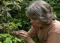 HS18-533z Blackberry, Rubus spp.