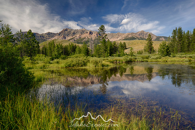 Idaho, South central, Sun Valley. The Boulder Mountains and summer sky reflected in a marsh.