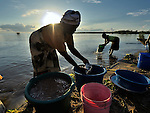A woman divides up the day's catch in Karonga, a town in northern Malawi. Fish from Lake Malawi, which is bordered by Malawi, Tanzania and Mozambique, provide an important part of people's diet in this area.