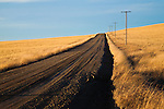 Country road through the wheat fields in eastern Montana