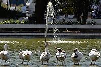 SAO PAULO, SP, 04 DE MAIO DE 2013 - MOVIMENTAÇÃO BOXES - SP INDY 300 SP - Patos se refrescam na água durante etapa da São Paulo Indy 300 na manhã deste sábado (04), que está sendo realizada no circuito de rua do Anhembi, zona norte da cidade. FOTO: LEVI BIANCO - BRAZIL PHOTO PRESS