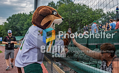 21 July 2019: University of Vermont Catamount mascot Rally Cat interacts with a fan prior to a minor league baseball game between the Vermont Lake Monsters and the Tri-City ValleyCats at Centennial Field in Burlington, Vermont. The Lake Monsters rallied to defeat the ValleyCats 6-3 in NY Penn League play. Mandatory Credit: Ed Wolfstein Photo *** RAW (NEF) Image File Available ***