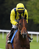 Arsonist ridden by Sean Levey goes down to the start of  The Draintech Tankers Nursery Stakes during Horse Racing at Salisbury Racecourse on 11th September 2020