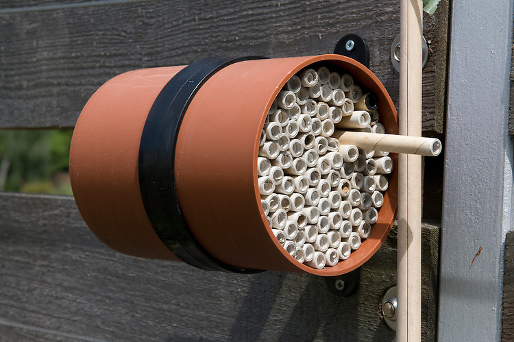 An insect hotel made from hollow cardboard tubes inside a short length of plastic drainpipe.