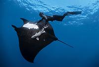 oceanic manta ray, Manta birostris, and free diver. Soccoro Island, Mexico, Pacific Ocean
