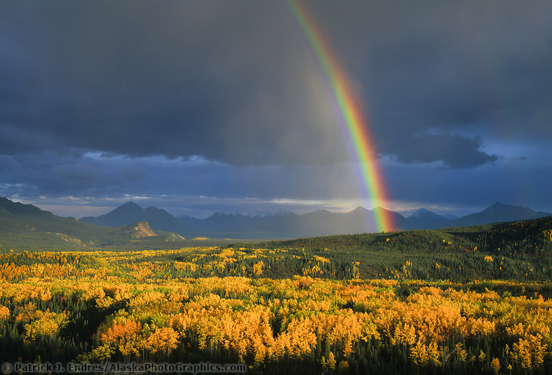 Rainbow arcs over autumn colored boreal forest in Denali National Park.