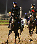 November 01, 2018 : Knicks Go in preparation for the Breeders' Cup on November 01, 2018 in Louisville, KY.  Candice Chavez/ESW/CSM