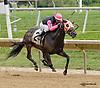 Hobson B winning at Delaware Park on 8/30/14