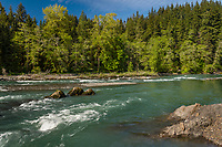 Hoh River, Olympic Peninsula, Washington.  May.