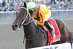 My Miss Aurelia (no. 1), ridden by Corey Nakatani and trained by Steven Asmussen, wins the  64th running of the grade 1 Frizette Stakes for two year old fillies on October 08, 2011 at Belmont Park in Elmont, New York.  (Bob Mayberger/Eclipse Sportswire)