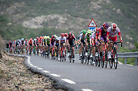 2nd peloton up the first categorised climb of the day: the Puerto de Bernardo<br /> <br /> Stage 20: Arenas de San Pedro to Plataforma de Gredos (190km)<br /> La Vuelta 2019<br /> <br /> ©kramon