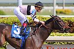 HALLANDALE BEACH, FL - DECEMBER 16:   #3 Lewis Bay (KY) wth jockey Irad Ortiz Jr on board, wins the Rampart Stakes GIII at Gulfstream Park on December 16, 2017 in Hallandale Beach, Florida. (Photo by Liz Lamont/Eclipse Sportswire/Getty Images)
