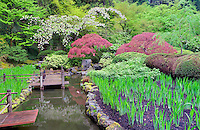Koi pond and cherry blossoms. Portland Japanese Gardens, Oregon