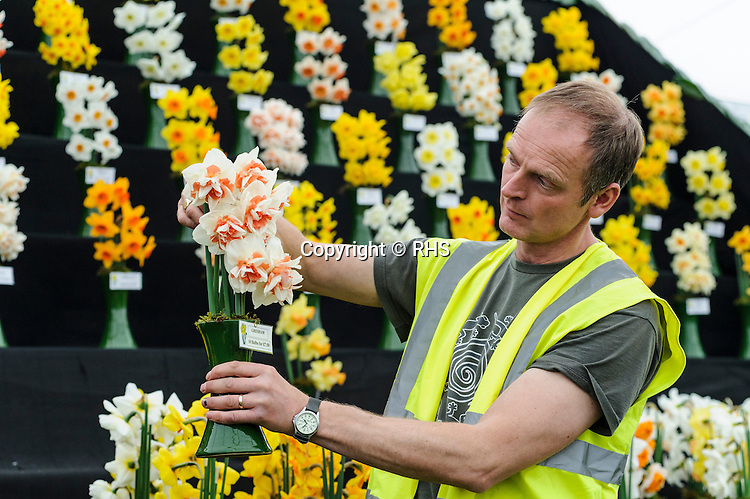 Adrian Scamp - Quality Daffodils in the Floral Marquee at the RHS Show Cardiff 2014