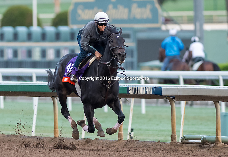 ARCADIA, CA - OCT 31: Avenge, owned by Ramona Seeligson Bass and trained by Richard E. Mandella, exercises in preparation for the Breeders' Cup Filly & Mare Turf at Santa Anita Park on October 31, 2016 in Arcadia, California. (Photo by Douglas DeFelice/Eclipse Sportswire/Breeders Cup)
