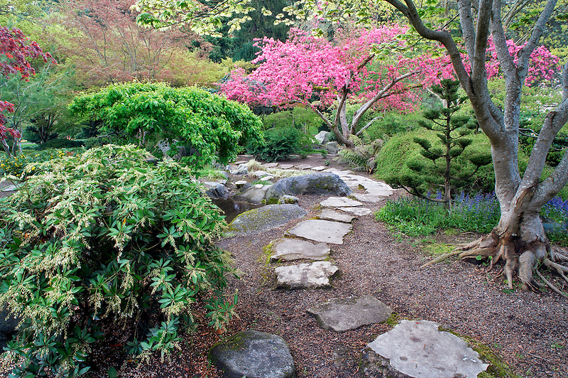 Stone path and flowering cherry tree in garden. Lithia Park, Ashland, Oregon