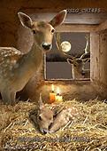CHIARA,CHRISTMAS ANIMALS, WEIHNACHTEN TIERE, NAVIDAD ANIMALES, paintings+++++,USLGCHI485,#XA# ,funny ,funny