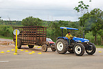 Farmer On Tractor Transporting Cattle