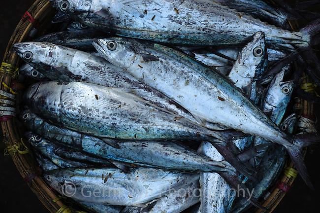 Fish market. Rakhine State, Myanmar. January.