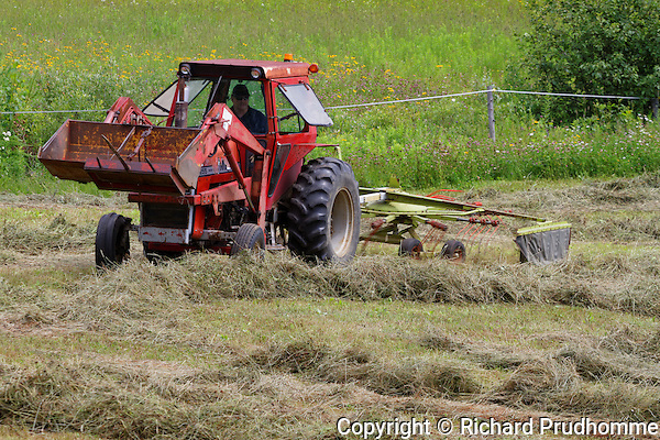 Raking hay in field with a farm tractor