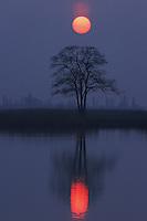 Tree at sunrise, Burgenland, Austria, Europe