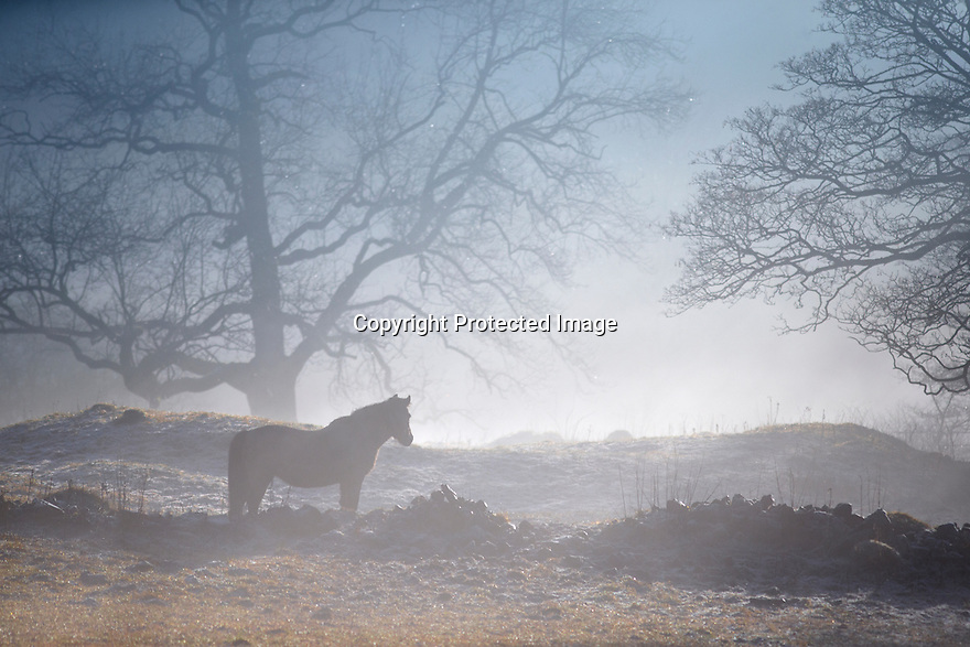 10/01/17<br /> <br /> Horses wake up to a misty and frosty morning in Monsal Dale near Bakewell, in the Derbyshire Peak District.<br /> <br /> All Rights Reserved F Stop Press Ltd. (0)1773 550665   www.fstoppress.com