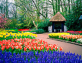 Tom Mackie, FLOWERS, photos, Spring Garden & Summerhouse, Keukenhof Gardens, Lisse, Holland, GBTM990355-1,#F# Garten, jardín