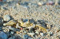 Reef Bay, St. John Virgin Islands National Park