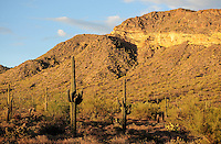 Usery Mountain Regional Park - Mesa, Arizona