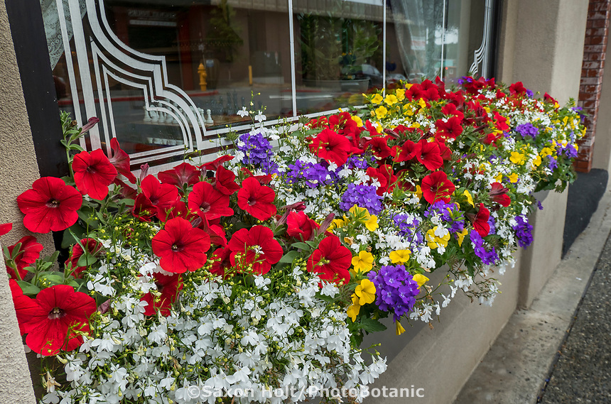 Hotel window box Anchorage, Alaska public landscaping with flowers