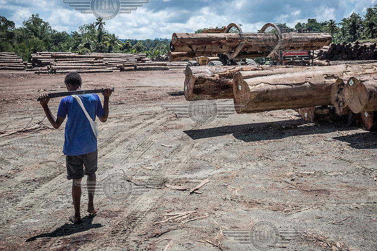 A resident of Nundawin village walks through an area near his home at Turubu Bay where logging continues despite claims by local landowners that it is illegal. Turrbu Bay is one of many places in PNG where logging companies are practising land grabs and illegal logging. Locals report that their sego palms are dying, fish are disappearing, landslides are destroying roads, and abandoned, unmaintained bridges, built by loggers to transport timber out of the forests, collapse, blocking rivers and this disrupts the irrigation systems that supply their crops.