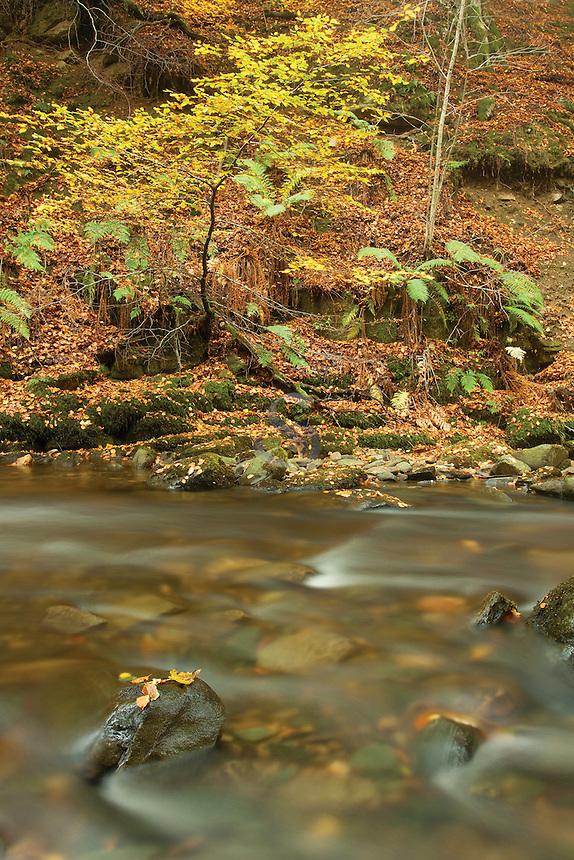 The Birks of Aberfeldy and the Moness Burn in autumn, Aberfeldy, Perthshire